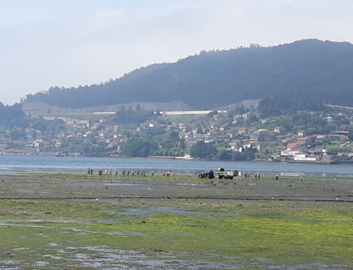 Procesos tecnológicos para el aprovechamiento de las algas de arribazón